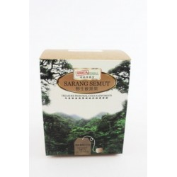 RH Rainforest Sarang Semut...
